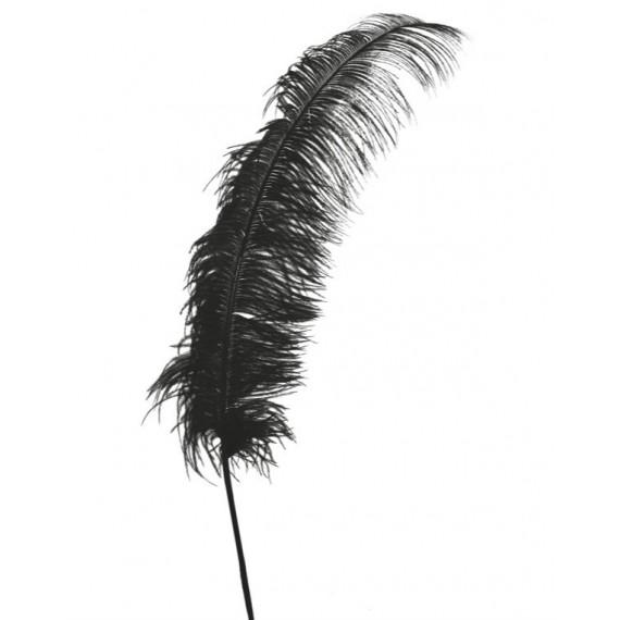 Pluma de Avestruz de 50 Centímetros de color Negro