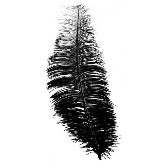 Pluma de Avestruz de 30 Centímetros de color Negro